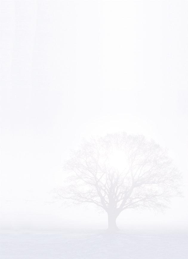Rouwkaart 'De Boom In De Mist'