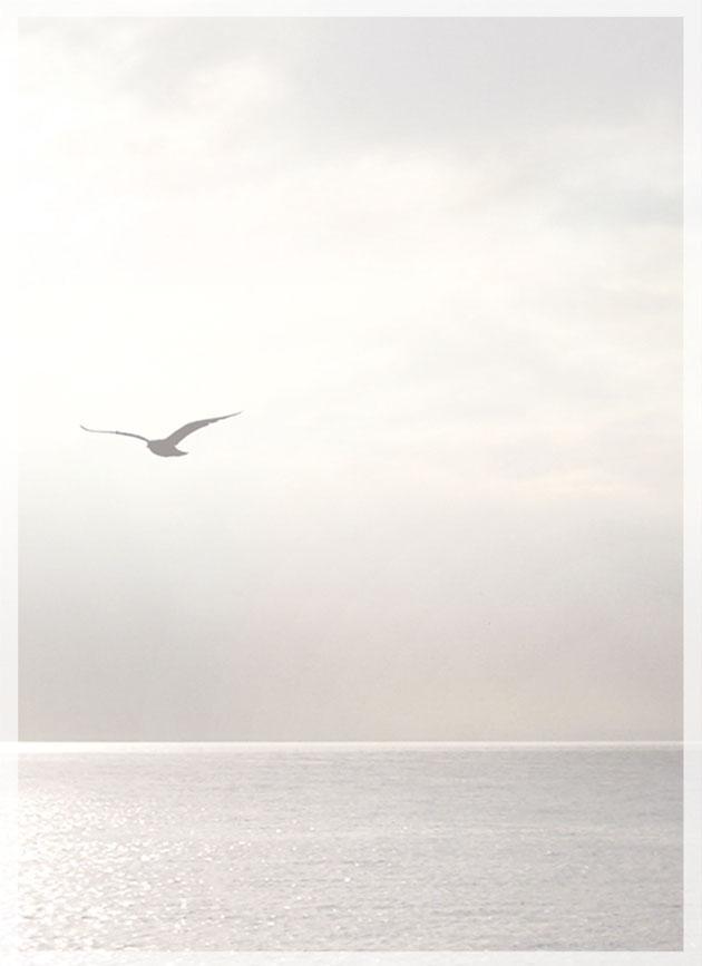 Rouwkaart 'De Vogel'