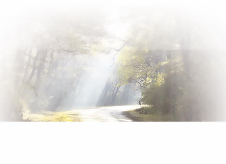 Rouwkaart 'Lichtstraal-bospad'